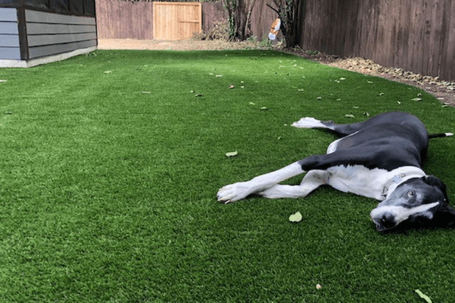 Grass for Pets