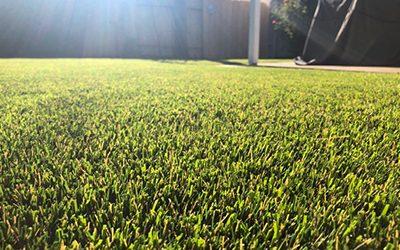 Vegas Artificial Grass on focus