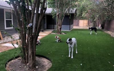 Vegas Artificial Grass - Dogs playing