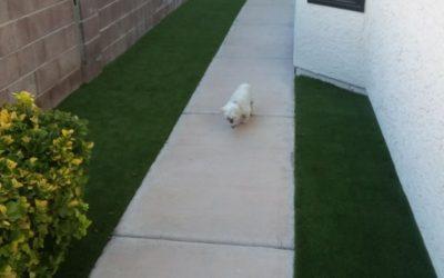 Vegas artificial grass dog
